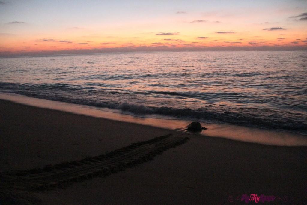 oman ras el jinz tartarughe alba (2)