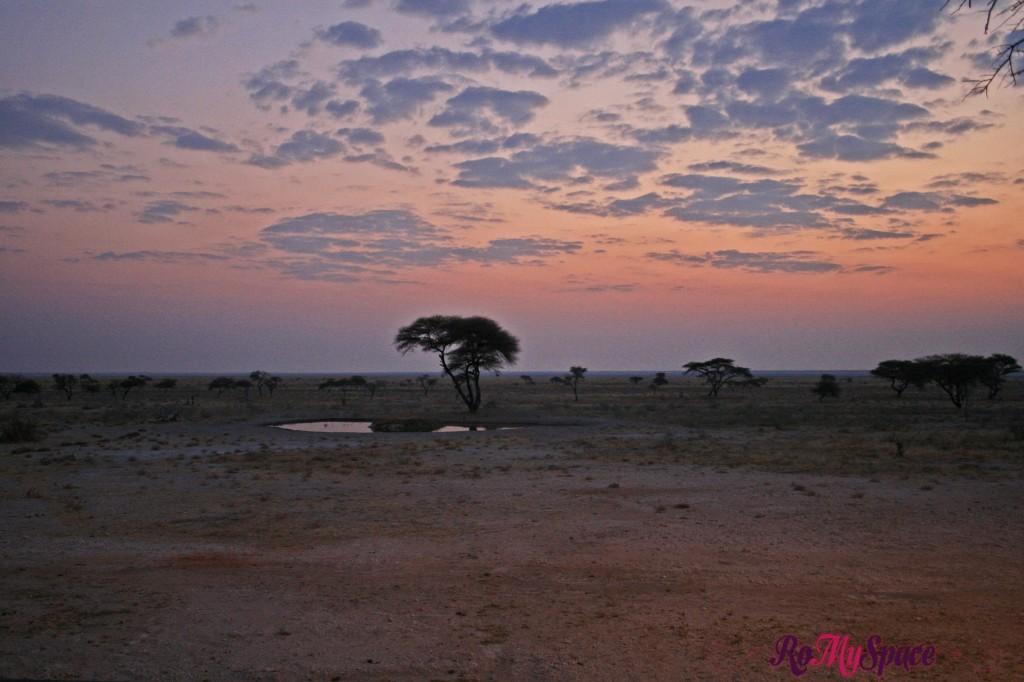 etosha - onguma game drive - tramonto - carlotta (12)b