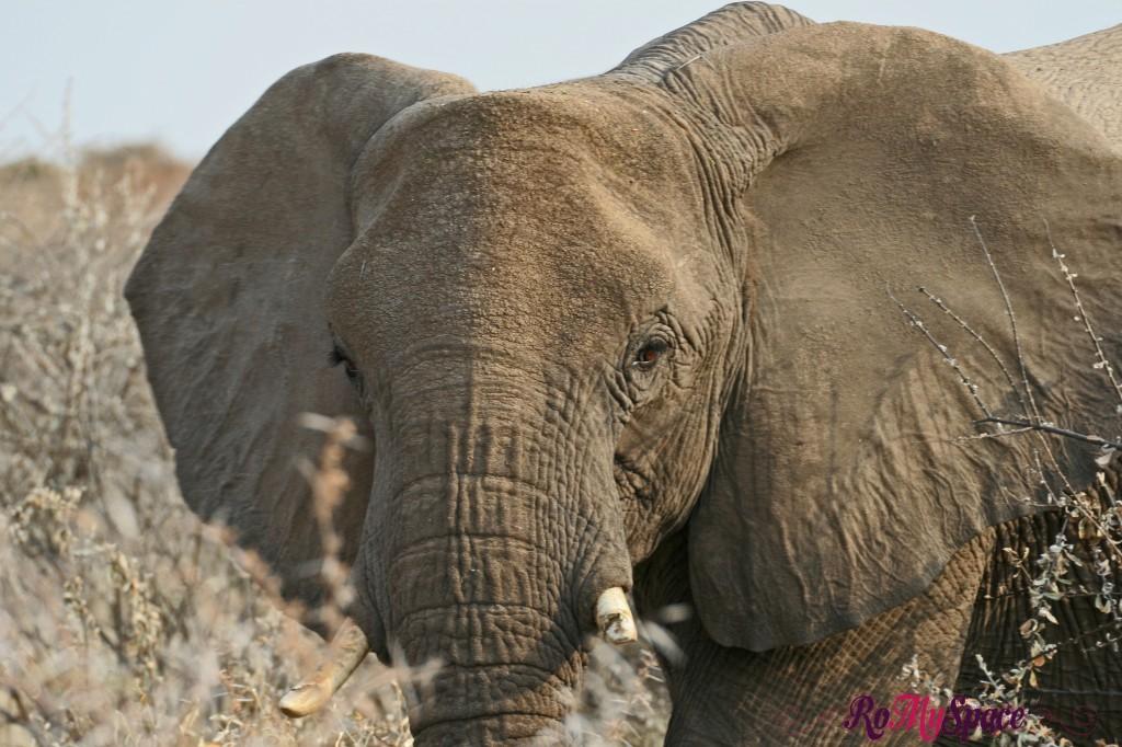 etosha - primo safari - elefanti - carlotta (21)b