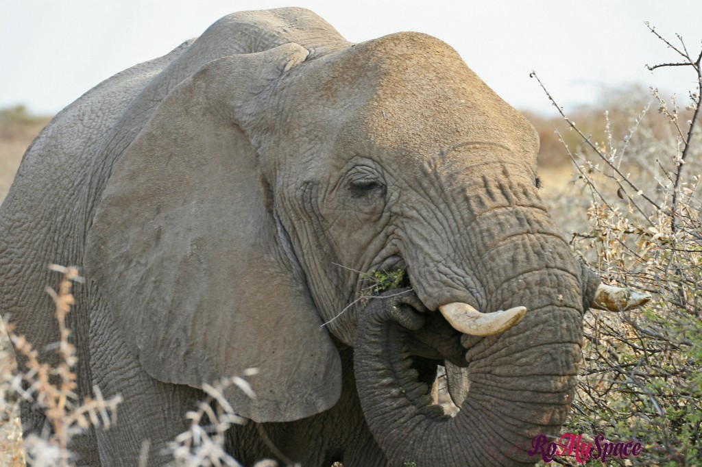 etosha - primo safari - elefanti - carlotta (36)b