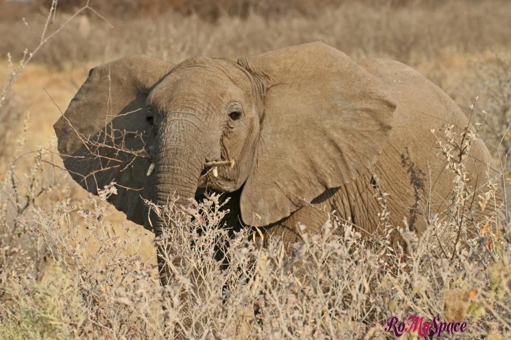 etosha - primo safari - elefanti - carlotta (50)b