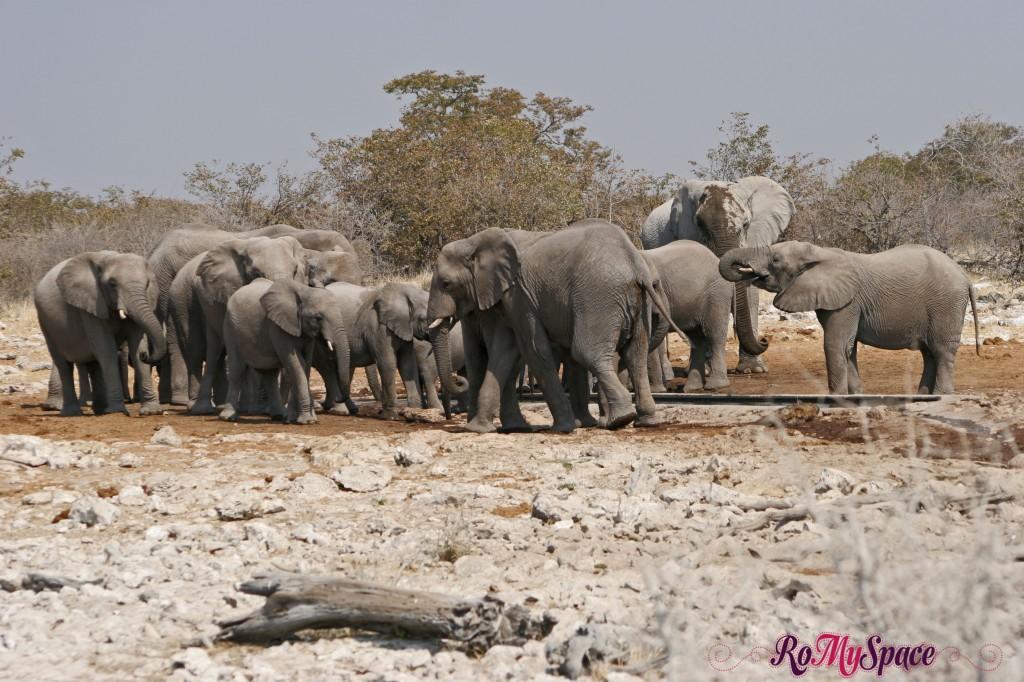 etosha - secondo safari - seconda pozza - zz - elefanti - camilla (28)b