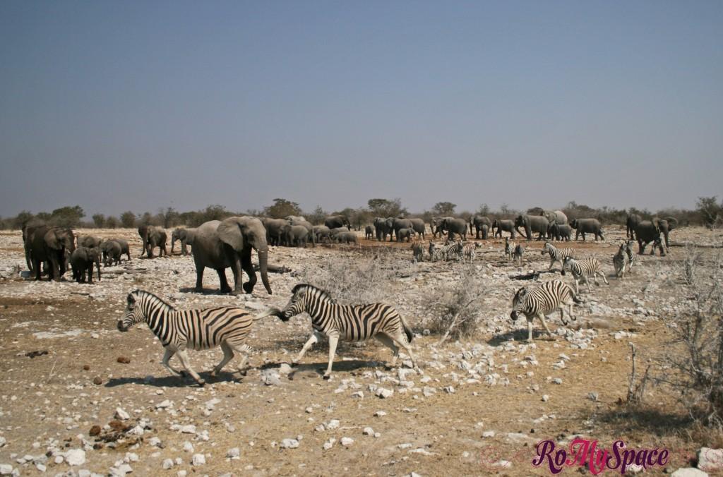 etosha - secondo safari - seconda pozza - zz - elefanti - camilla (79)b