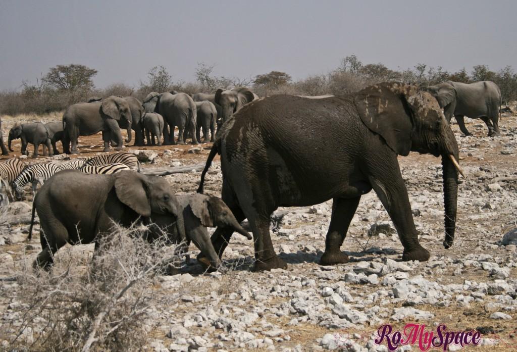 etosha - secondo safari - seconda pozza - zz - elefanti - camilla (93)c
