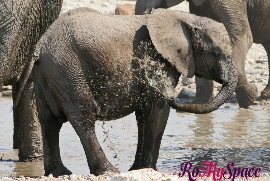 etosha - secondo safari - seconda pozza - zz - elefanti - carlotta (123)b