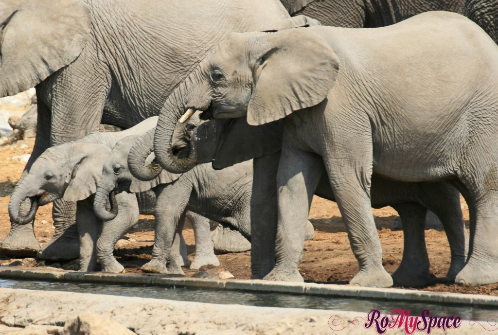 etosha - secondo safari - seconda pozza - zz - elefanti - carlotta (12)b
