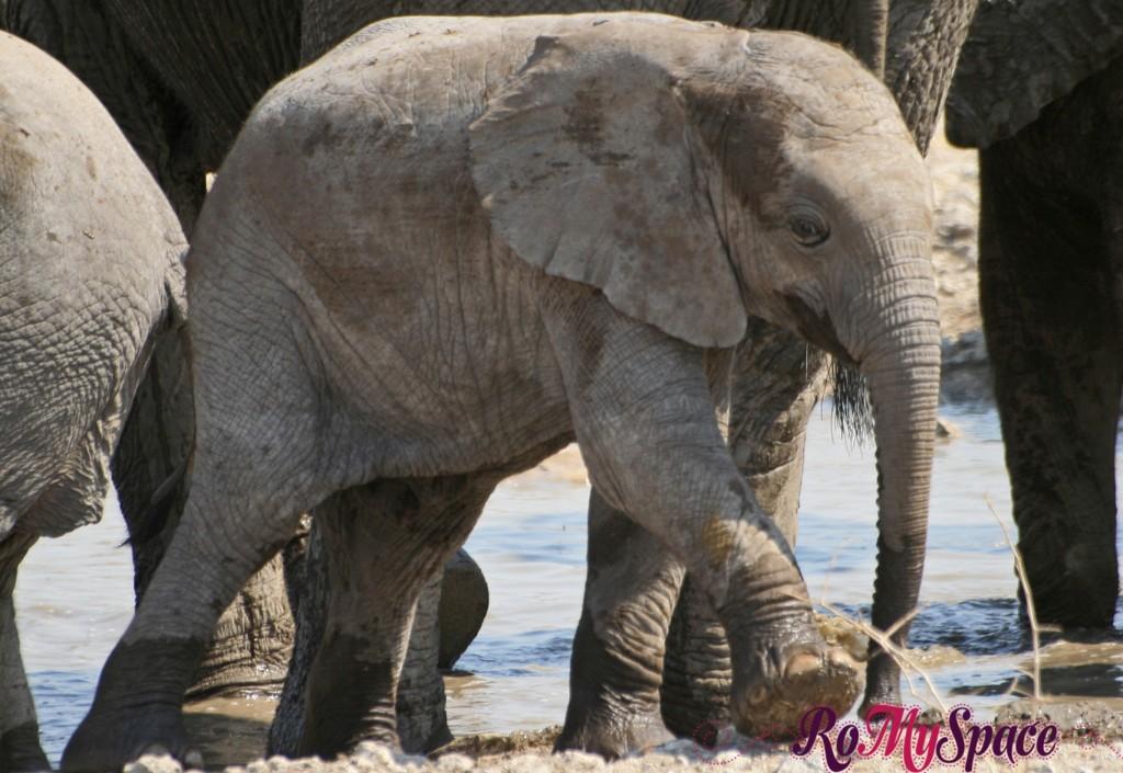 etosha - secondo safari - seconda pozza - zz - elefanti - carlotta (148)b