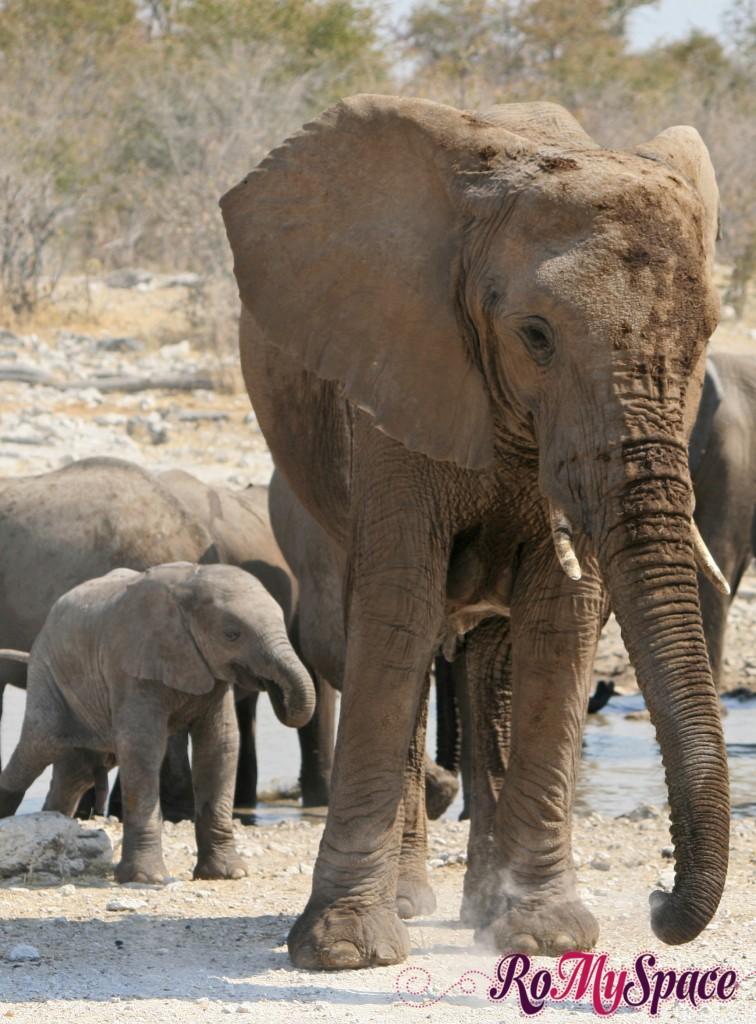 etosha - secondo safari - seconda pozza - zz - elefanti - carlotta (156)b