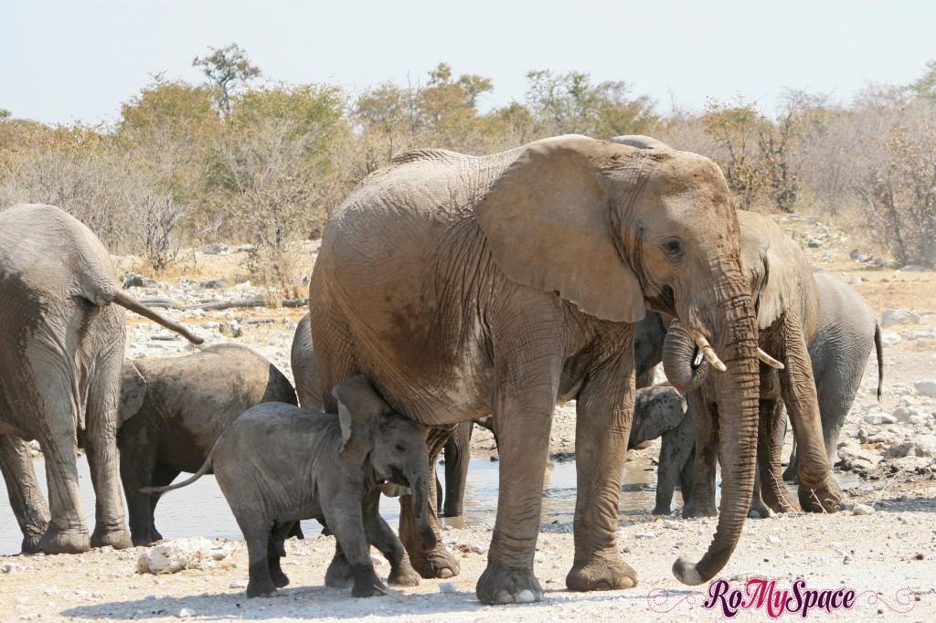 etosha - secondo safari - seconda pozza - zz - elefanti - carlotta (167)b