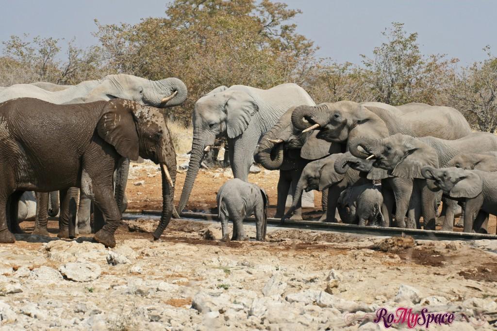 etosha - secondo safari - seconda pozza - zz - elefanti - carlotta (74)b