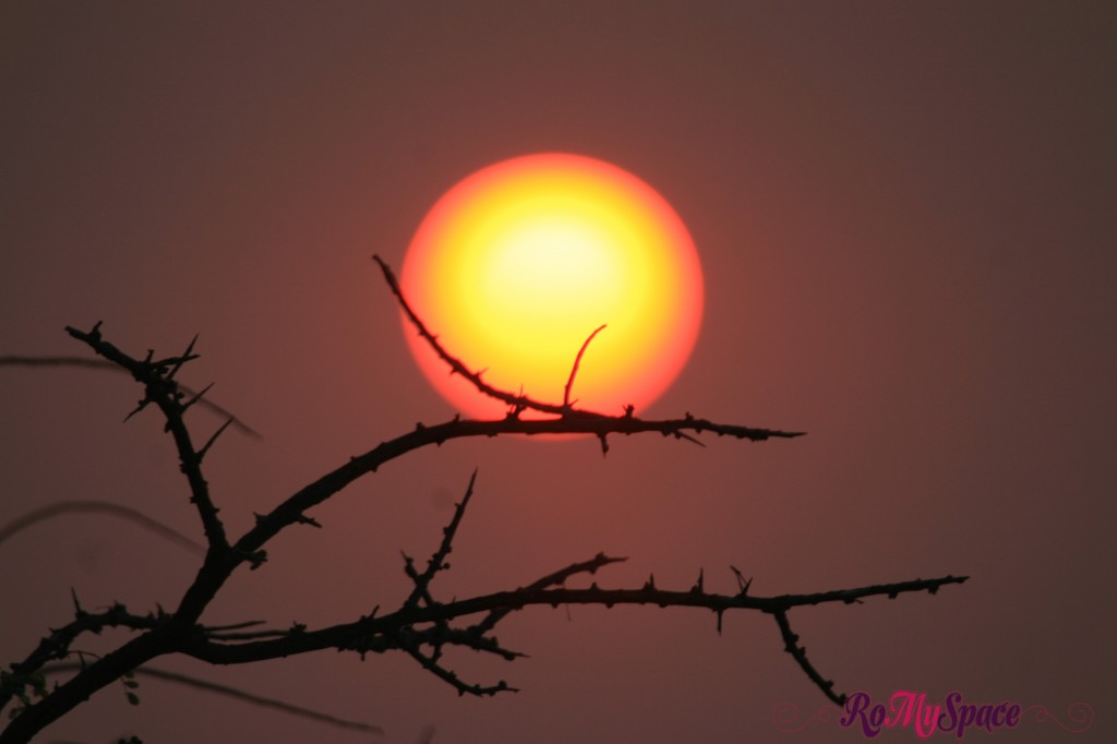 onguma - tramonto - carlotta (18)