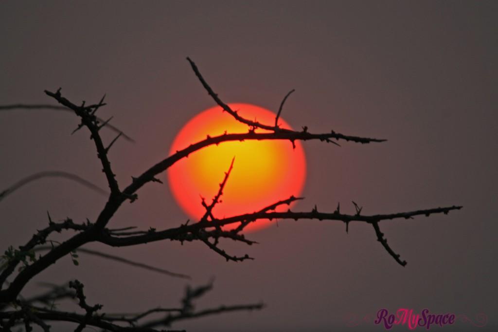 onguma - tramonto - carlotta (19)b