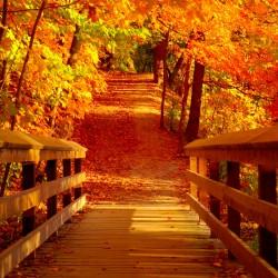 Dal Canada a Yellowstone per ammirare i colori d'autunno