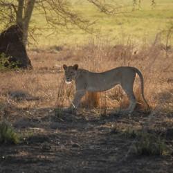 Safari in Mozambico, la Riserva di Niassa e il Parco Nazionale di Gorongosa