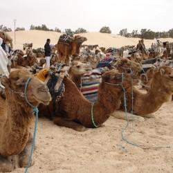 Nel deserto tunisino