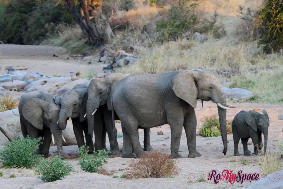ruaha romina facchi elephant romyspace