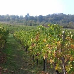 Oltrepò Pavese: vini e antichi borghi