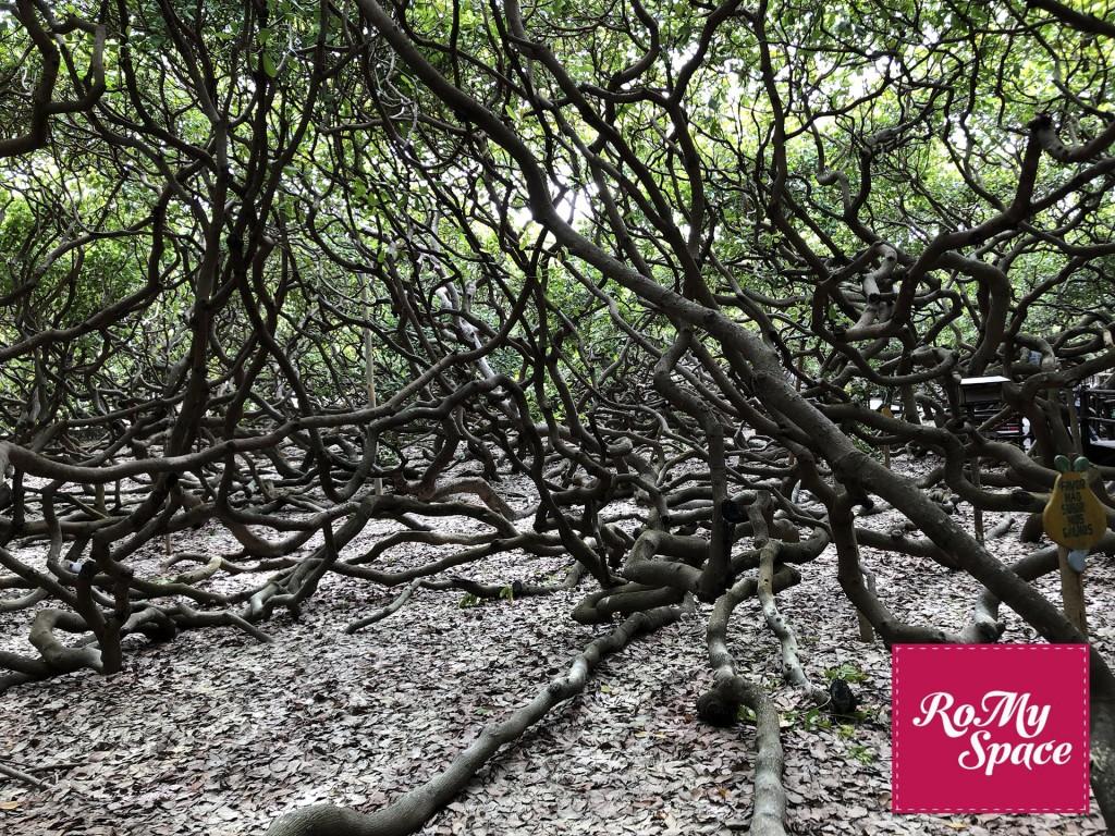 albero 8