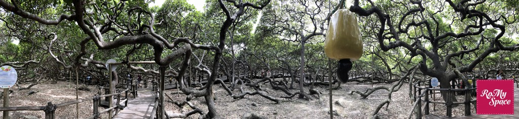 albero panoramica