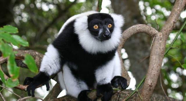 Madagascar: tra lemuri e spiagge