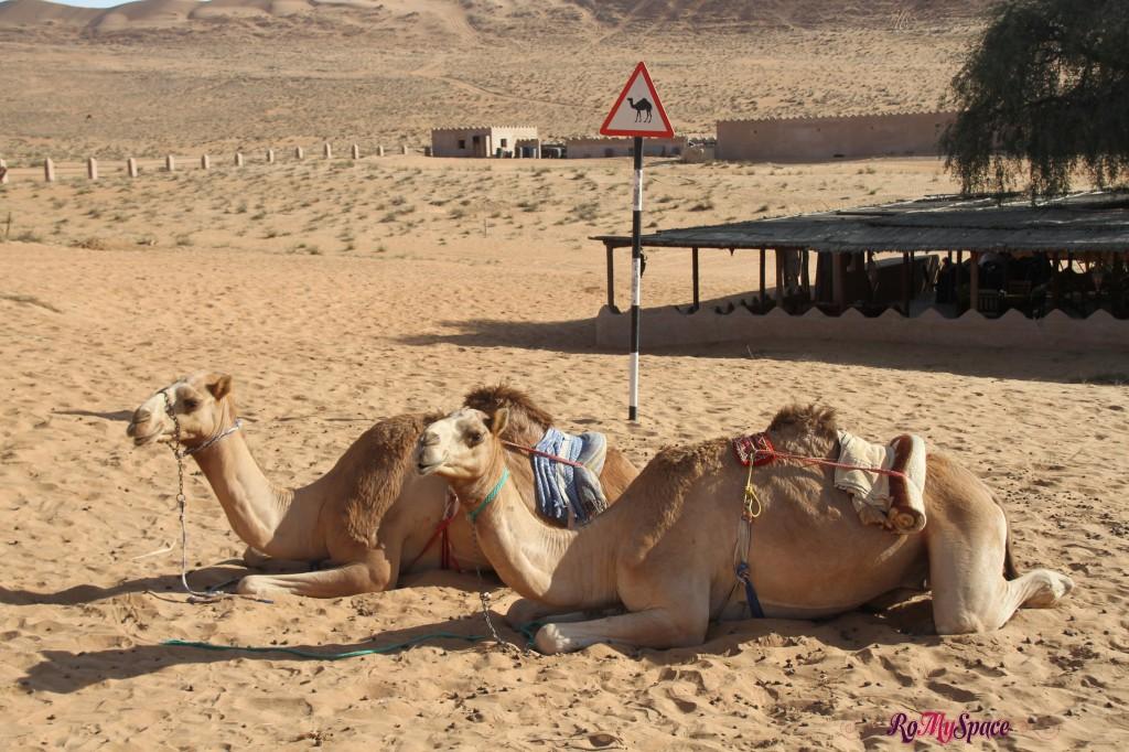 oman deserto sharqiya 1000 nights camp cammelli