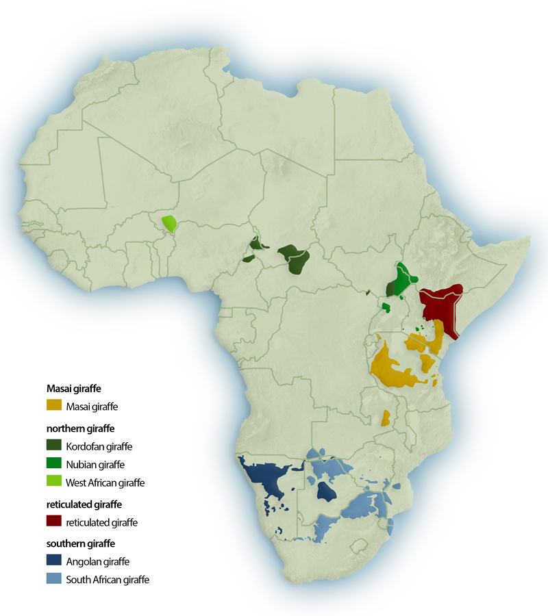 giraffe-distribution-map_eng2