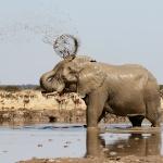elephant botswana nxai pan exploringafrica safariadv