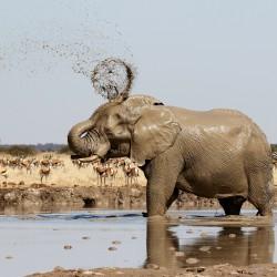 Safari che passione!