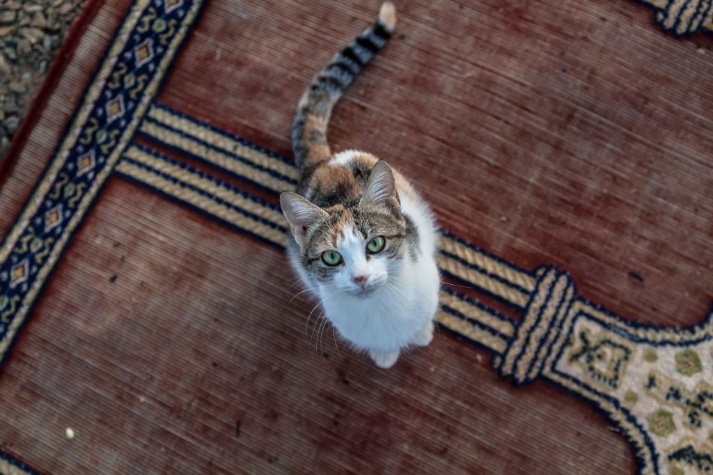 Amo tutti gli animali ma per i gatti ho un vero e proprio debole, questo gattino mi è corso incontro appena ho messo piede nel campo nel deserto del Sahara in Marocco e ho passato almeno venti minuti seduto a coccolarlo!