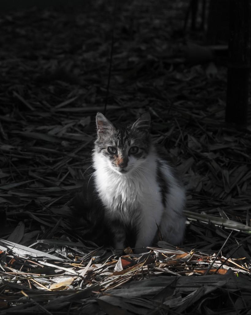 L'ho già detto che amo i gattini no?